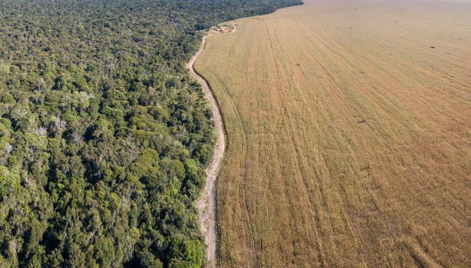 A soja está destruindo o meio ambiente — e a sua saúde